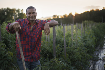 Organic Farmer with Tomato Plants