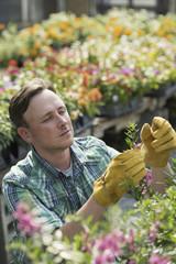 A man working in an organic nursery greenhouse.