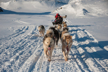 Autocollant pour porte Pôle Dog sledding in Tasiilaq, East Greenland