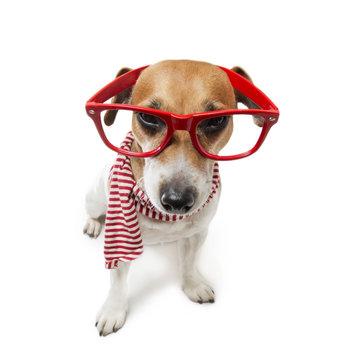 strict but fair trendy dog