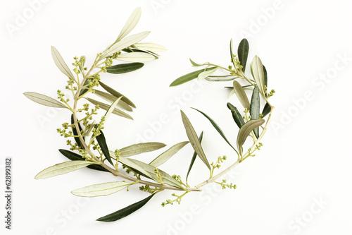 Fototapete Rami e foglie d'ulivo a forma di cuore