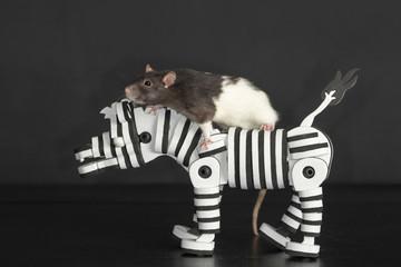 rat riding on toy zebra