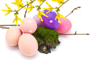 Easter eggs and forsythia flowers  isolated on white