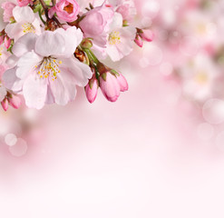 Poster Bloemen Spring flowers background with pink blossom
