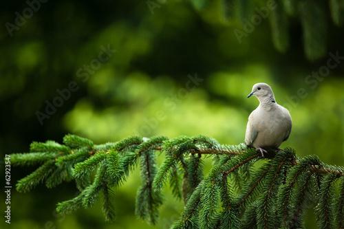 природа белые птицы ветка голуби  № 592540 загрузить