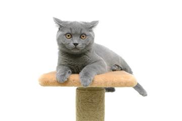 kitten on a white background closeup