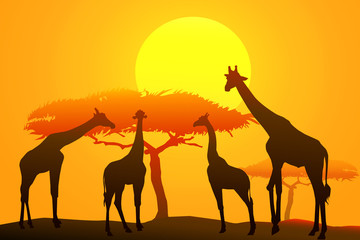 African safari at sunset -vector