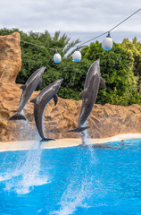 Dolphins jumping to reach balls during a park show