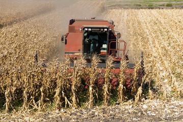 Combine Harvests Corn