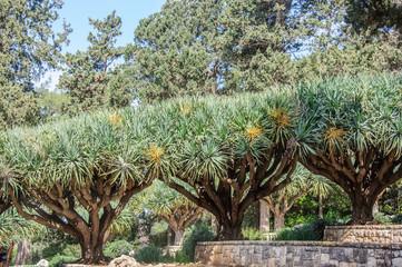 Row of trees in gardens of Baron Edmond de Rothschild (National