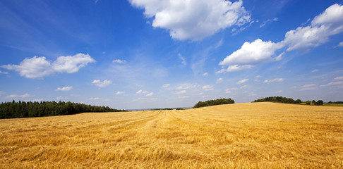 harvest cereals - an agricultural field on which were the crop of cereals is reaped