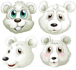 Heads of polar bears