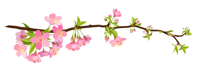 kirschbaum, kirsche, blüte, cherry blossom, bloom, branch, tree
