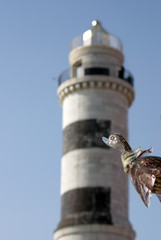 Murano Glass Bird in Venice
