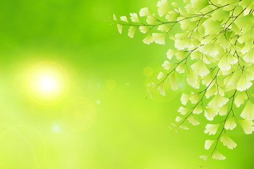 Spring natural background.Stock photo