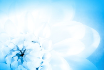 Blue floral card,  (soft focus)