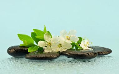Obraz Białe kwiaty na kamieniach do spa - fototapety do salonu