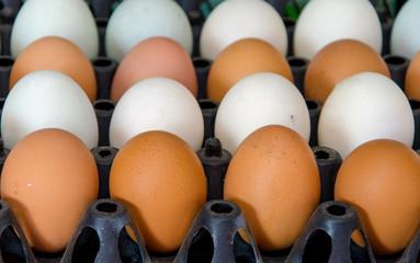 duck eggs and chicken egg  in carton box