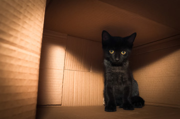 bright eyed black kitten hiding in a cardboard box