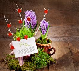 Fresh flowers hyacinths. Green concept