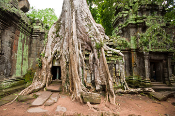 Ancient buddhist khmer temple in Angkor Wat, Cambodia.Ta Prohm P