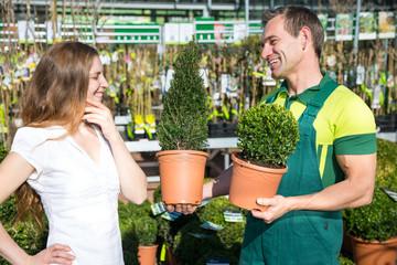 Gardener at garden center presenting boxtrees to customer