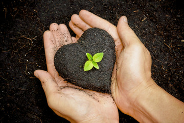 hand holding soil as a heart shape with a tree / grow tree