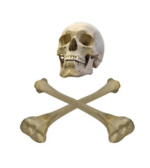 isolated human skull and crossed bones