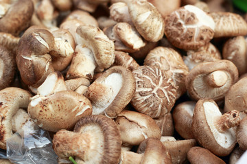 fresh mushrooms in the market