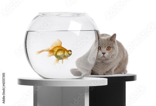 Черный котенок с золотой рыбкой  № 2955072 бесплатно