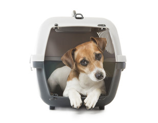Pets crate transportation