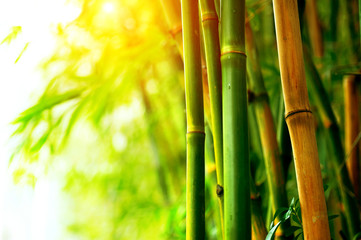 Wall Mural - Bamboo Forest