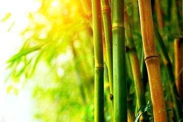 Fotoväggar - Bamboo Forest