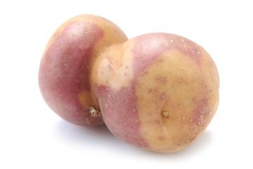 "Potato ""Miss Blush"""