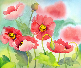 Watercolor of pink poppies on sunny flowerbed
