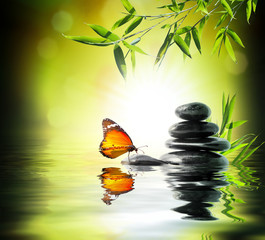 Wall Mural - exclusive delicate concept - butterfly on water in garden