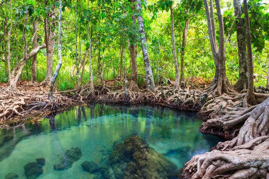 Tha Pom, the mangrove forest in Krabi, Thailand