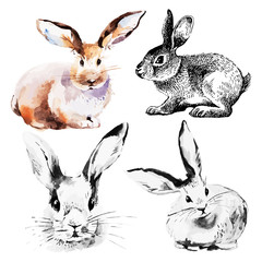 Set of Easter rabbits. Hand drawn sketch watercolor
