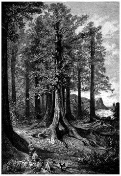 Giant Tree - Arbre Géant