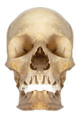 Human skull, isolated on white