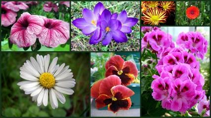 Collage Frühlingsblumen