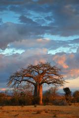 Landscape with baobab