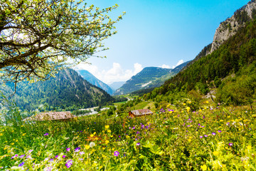 Wall Mural - Beautiful sunny scenery near Alps