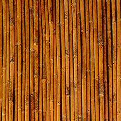 Bamboo for background  texture