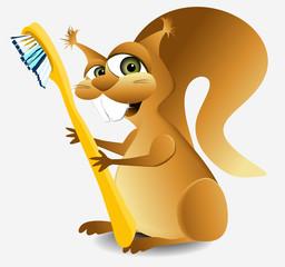 Dental squirrel