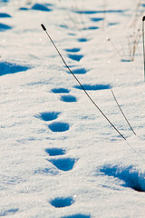 Winter track on snow in sunny day