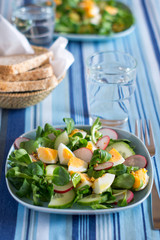 Green cornsalad salad with eggs, cucumber and radish