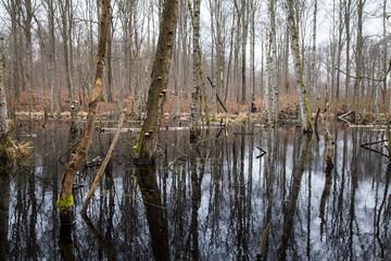 Fallen Trees in Swamp