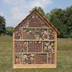 Photos illustrations et vid os de maison des insectes for Insecte de bois maison