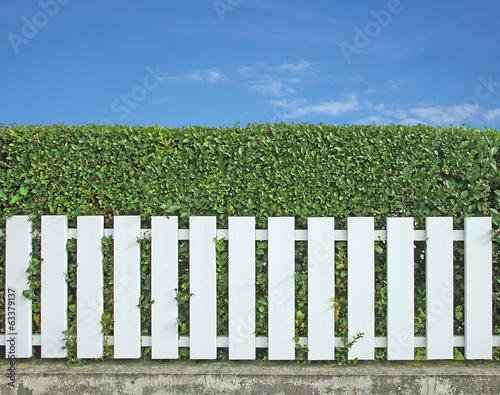 haie de laurier derrière clôture en PVC\